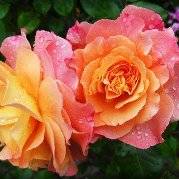 Outdoor All Age Worship 1st August  10am – Molson Garden